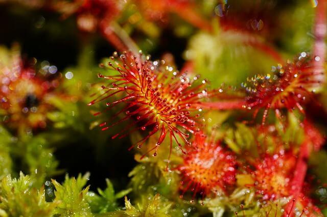 Плотоядные растения-хищники - фото, виды, описание