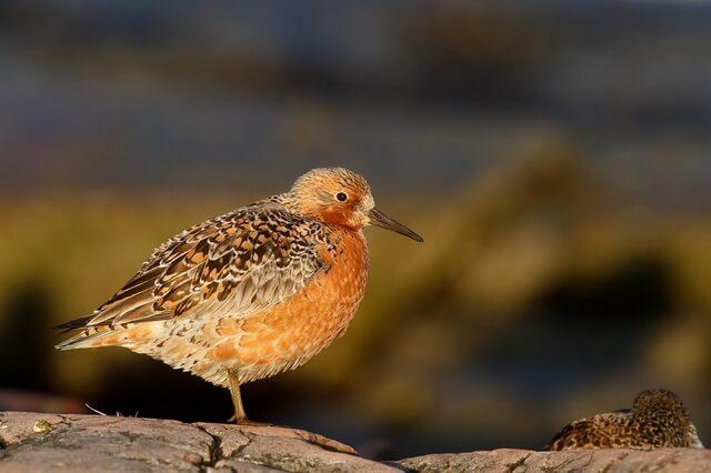 Красивые птицы Арктики - фото, названия, описание