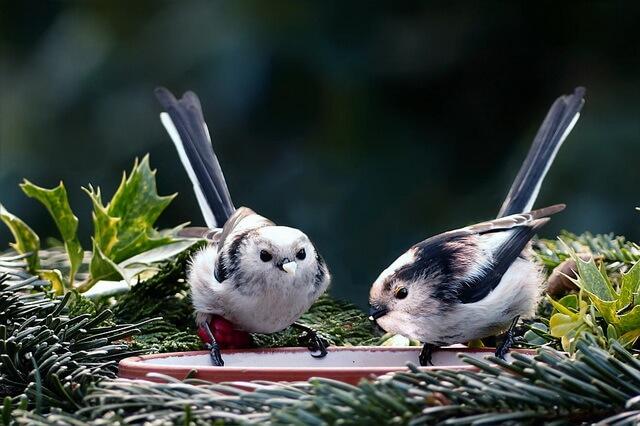 Птицы с красивым хвостом - фото, названия, описание