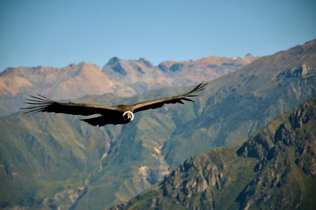 Национальные птицы Южной Америки - фото, названия, описание