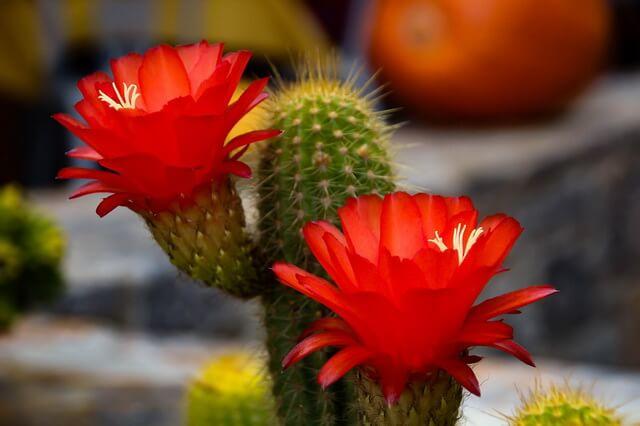 Растения-обереги - защита дома от негатива