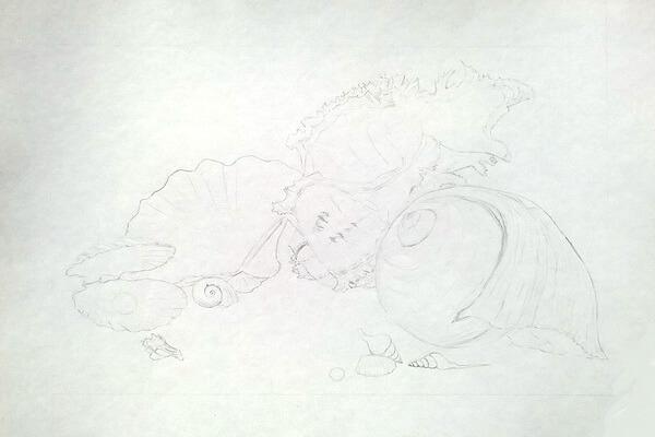 Как рисовать красивые рисунки морских ракушек поэтапно - шаг 4
