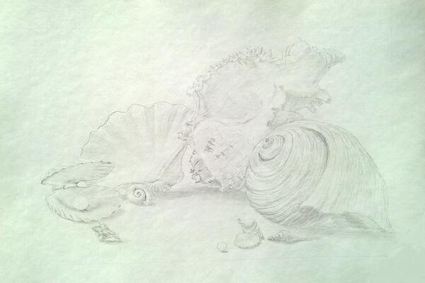 Как рисовать красивые рисунки морских ракушек поэтапно - шаг 5