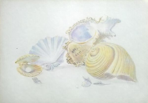 Как рисовать красивые рисунки морских ракушек поэтапно - шаг 7