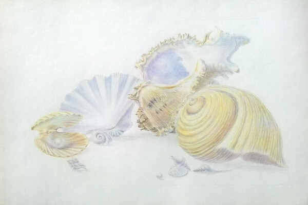 Как рисовать красивые рисунки морских ракушек поэтапно - шаг 8