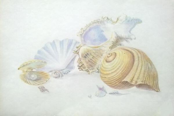 Как рисовать красивые рисунки морских ракушек поэтапно - шаг 9