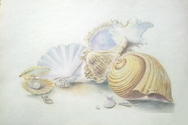 Как рисовать красивые рисунки морских ракушек поэтапно - шаг 10