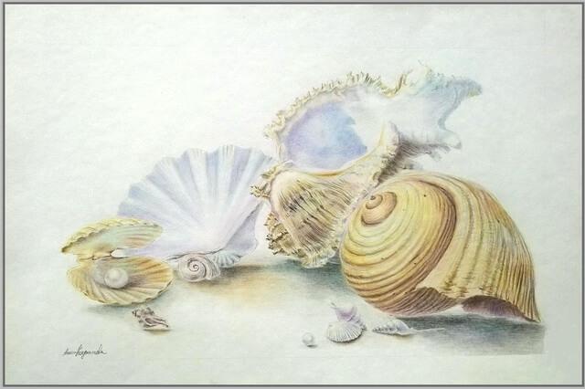 Красивые рисунки морских ракушек - пошаговый урок рисования для начинающих