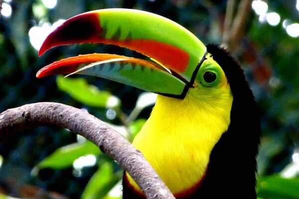 Самые дорогие птицы с фото, названием и описанием - Тукан