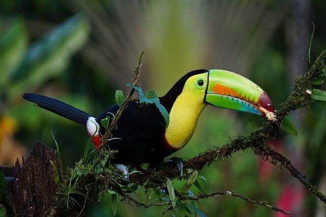 Самые дорогие птицы в мире - фото, названия, описание, цена