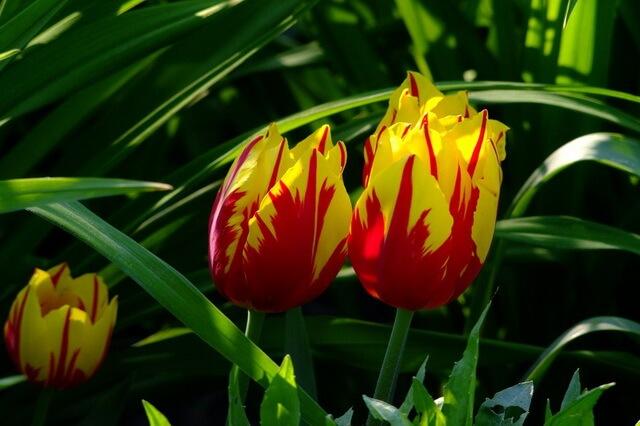 ТОП-10 самых красивых цветов в мире с фото, названиями и описанием