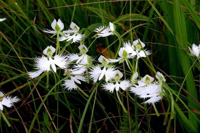 Самые красивые орхидеи с фото и описанием
