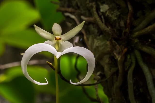 Самые красивые и редкие цветы с фото и описанием
