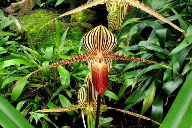 Самые редкие орхидеи - фото, названия, описание