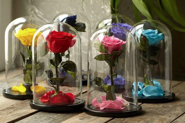 Стабилизированные розы в колбе - прекрасный подарок