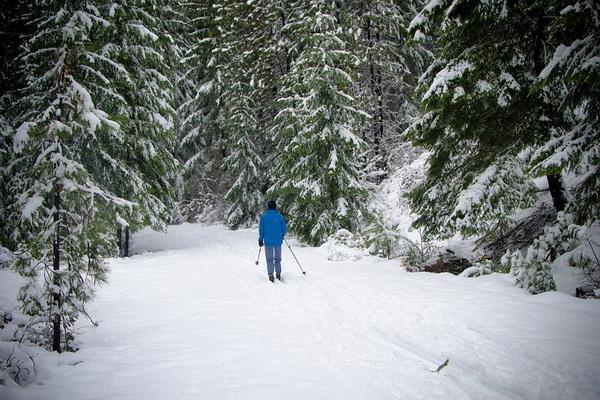 Снежная сказка зимнего леса-01
