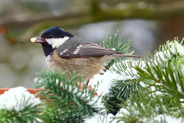 Птицы в зимнем лесу