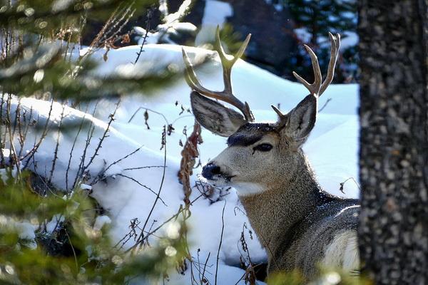 Животные в зимнем лесу