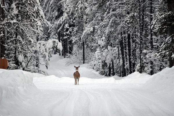 Красивые фото зимнего леса