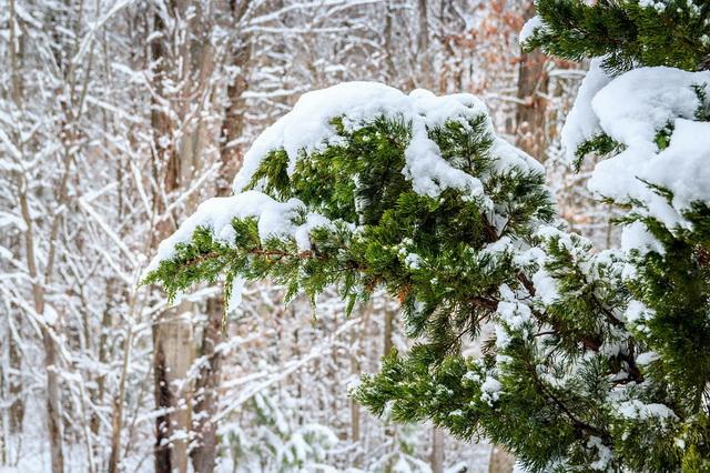 Снежная сказка зимнего леса