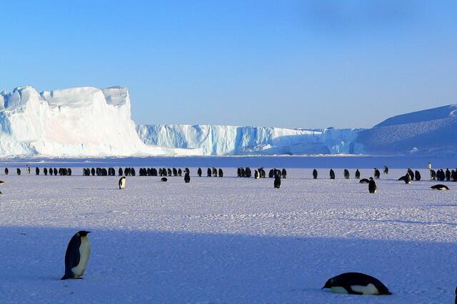 Животные и птицы Антарктиды - основные виды с фото и описанием